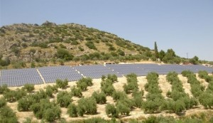 huerto solar jaen 3